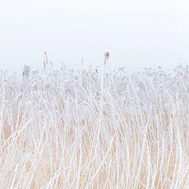 Een met rijp bedekte rietkraag in het friese landschap. Wout Kok One2expose Photography von Wout Kok