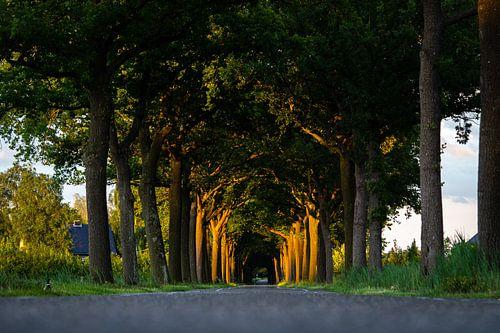 Laatste zonlicht kleurt de bomen