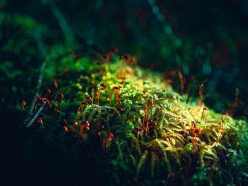 Planten in het bos met zonnestraling van Mustafa Kurnaz