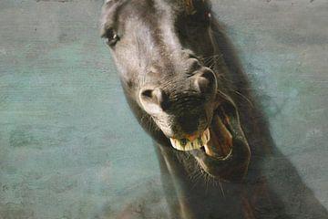 Paard aan de muur 2 sur Wybrich Warns