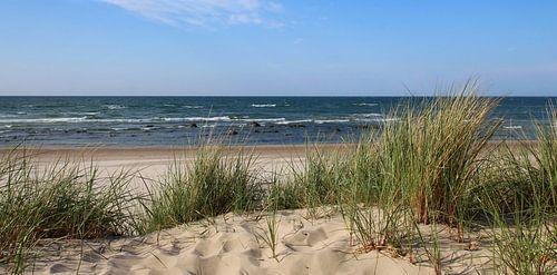 Dünenpanorama von Ostsee Bilder