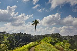 Schöne Landschaft mit Reisterrassen und Kokosnusspalmen in der Nähe des Dorfes Tegallalang, Ubud, Ba von Tjeerd Kruse