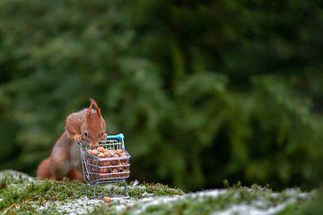 Hamsteren/shopping van Corinne Cornelissen-Megens