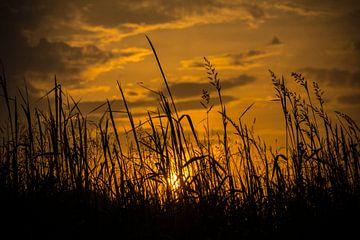 avond zon von Jamie Lebbink