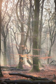 Verträumter Wald von E Blaas