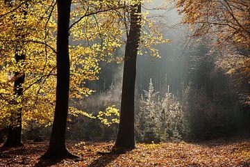 Sprookjesachtende herfstochtend van Aukje Ploeg