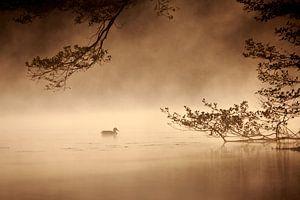 Ente bei Sonnenaufgang van