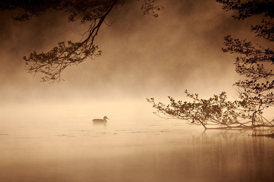 Ente bei Sonnenaufgang