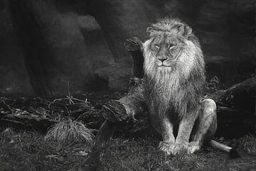 De koning van de wildernis in zw-wit