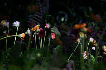 Wilde Bloemen van Petro Luft