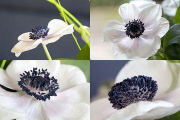 4 Mal Anemone (2) von Jolanda van Eek