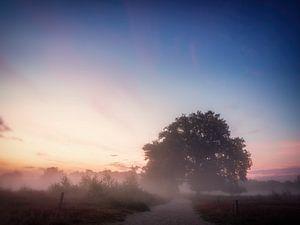Into the morning light van Lex Schulte