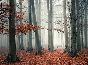 Nebliger Wald mit rotem Herbstlaub von