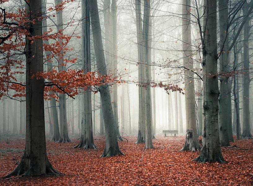 Bankje in mistig bos van Rob Visser