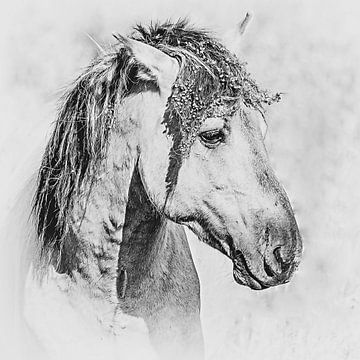 Zwart-wit portret van een mooi konikpaard van Fotografie Jeronimo