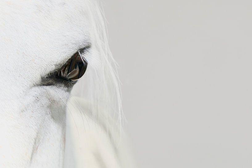 The white horse van Elianne van Turennout