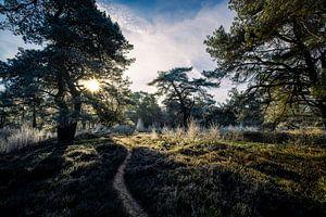 Roden Mensingebos, heideveld op een winterochtend met laaghangende zon in Drenthe van Arjan Boer