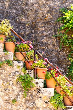 Bloempotten op Zakynthos, Griekenland van