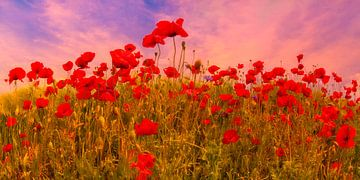 Idyllisches Mohnblumenfeld bei Sonnenuntergang von Melanie Viola