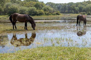 Pferde im Wasser II von Dokra Fotografie