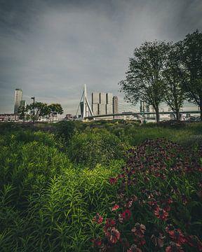 Erasmusbrücke von They Kept Heading Park Rotterdam von MAT Fotografie