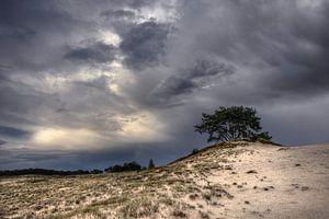 Bomen en duinen III