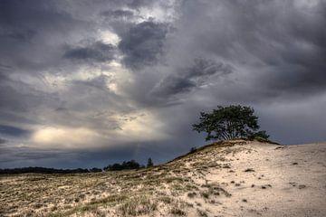 Bomen en duinen III van Mark Leeman