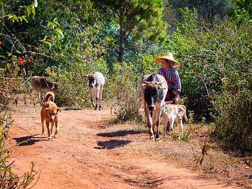 De Vrolijkste Veehouder van Kalaw Myanmar van Rik Pijnenburg