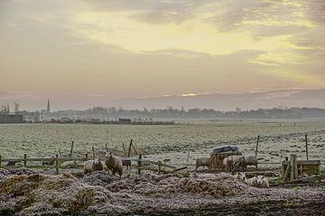 schapen in de wei von Dirk van Egmond