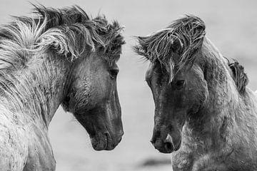 Vechtende wilde paarden van Inge Jansen