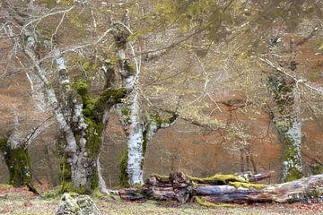 Bäume von Irati, Baskenland von Lars van de Goor