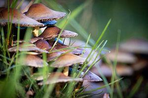 paddestoelen in gras van Maarten van Loon