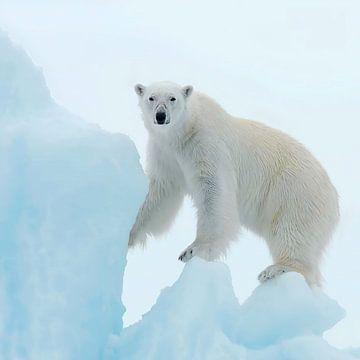 Eisbär von David Potter