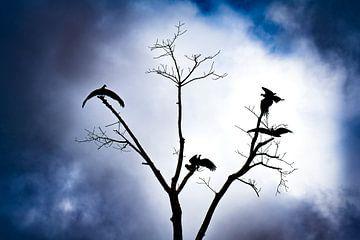 Mysterieuze roofvogels dichtbij Iquitos, Peru van John Ozguc