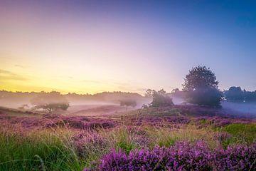 Nebel auf den Hügeln mit Heidekraut auf der Posbank von Arjan Almekinders