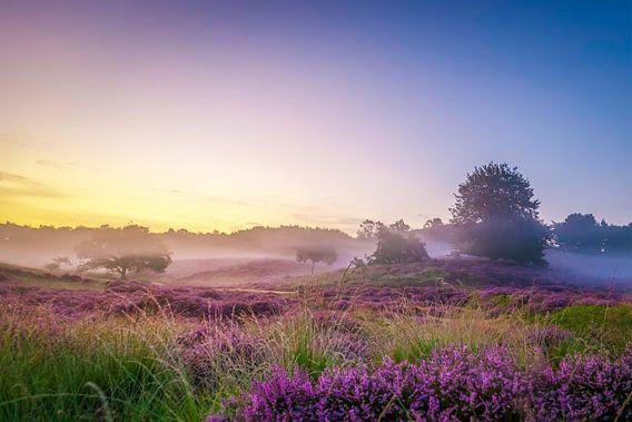 Mist op de heuvels met heide op de Posbank