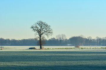 Baum im Winter von Tania Perneel