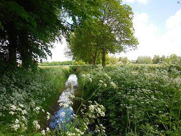 Landschap met beekje en bloemen van Joke te Grotenhuis