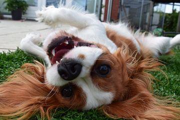 Portret vrolijke, speelse hond  van Chloe 23