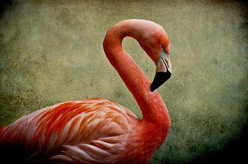 Flamingo van Angela Dölling