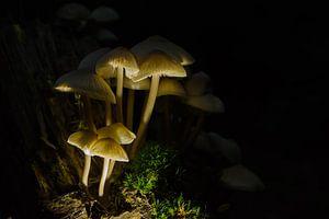 Belichte paddenstoelen van