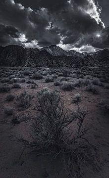 Quand l'obscurité monte sur Joris Pannemans - Loris Photography