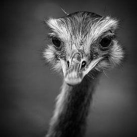 Emoe in zwart-wit van Fotografie Jeronimo