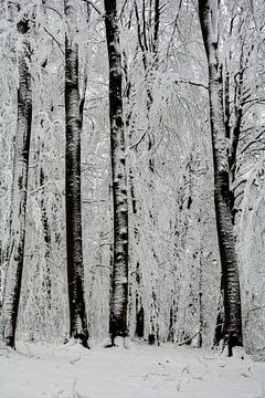 Winter Wald von Claudia Evans