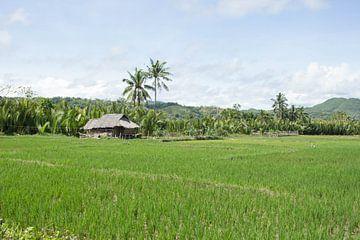 Filipijnen - Rijstvelden van Chantal Cornet