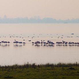 Flamingos von Nuance Beeld