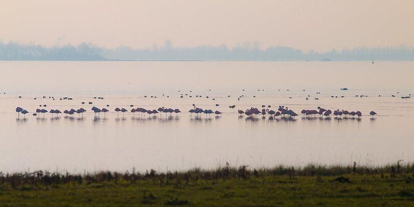 Flamingo's van Nuance Beeld
