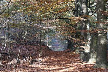 Herfstbladeren van Eric-Jan Oud