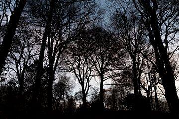Düsterwald und Finsterwald mit Silhouetten dunkler Winterbäume von Christian Feldhaar