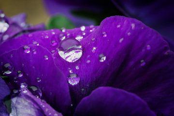 Oh nee, het regent weer! van Jan van der Knaap